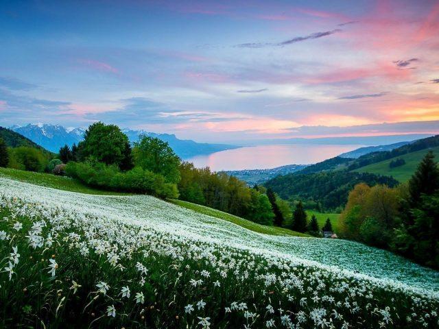 Белые цветы склон на холмах под голубым небом природа