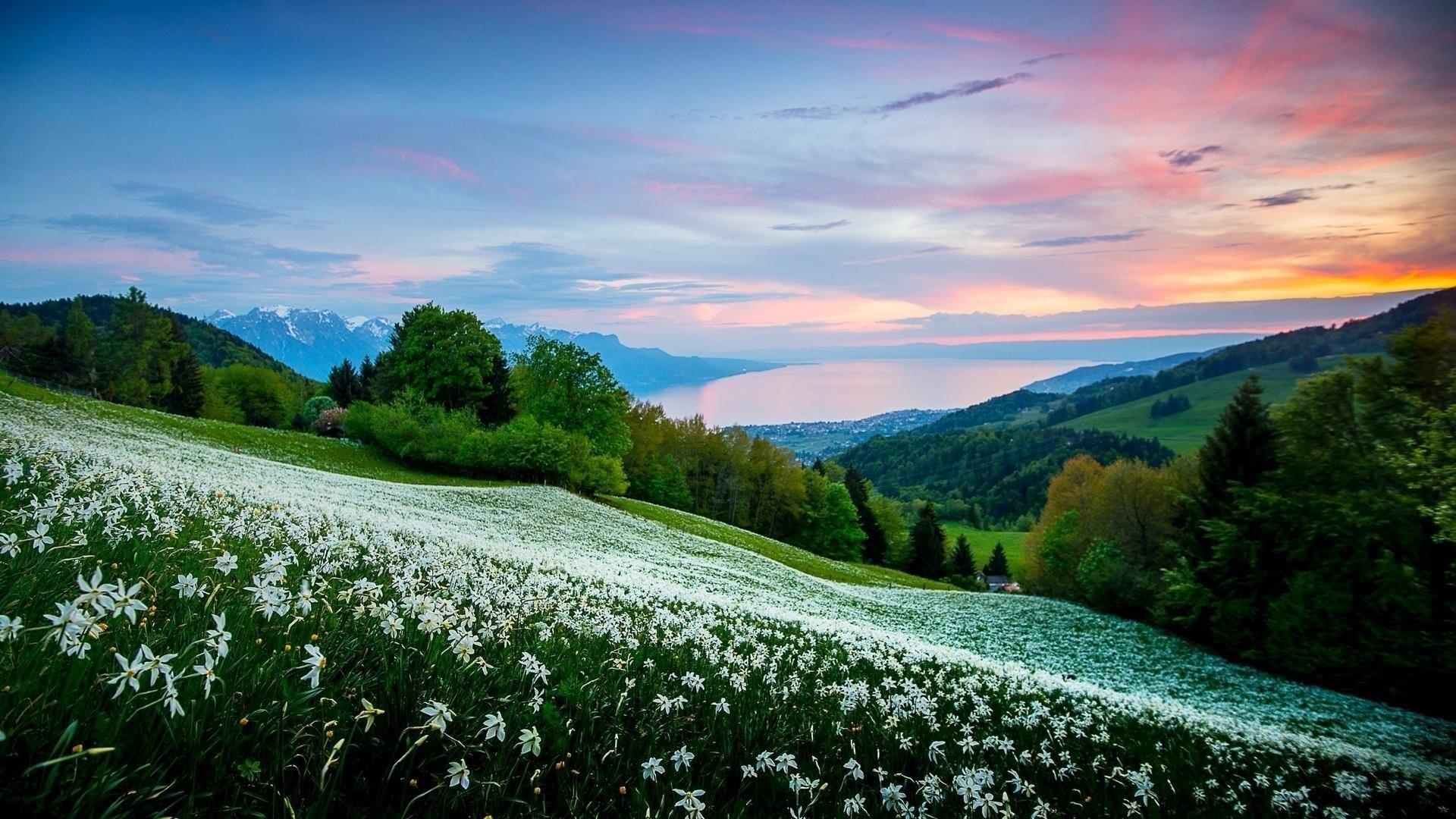 Белые цветы склон на холмах под голубым небом природа обои скачать