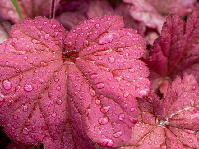 Красные листья растений с каплями воды природа