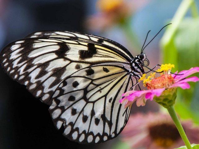 Легкая сандалия черные линии бабочка на цветке желтая бабочка из нити