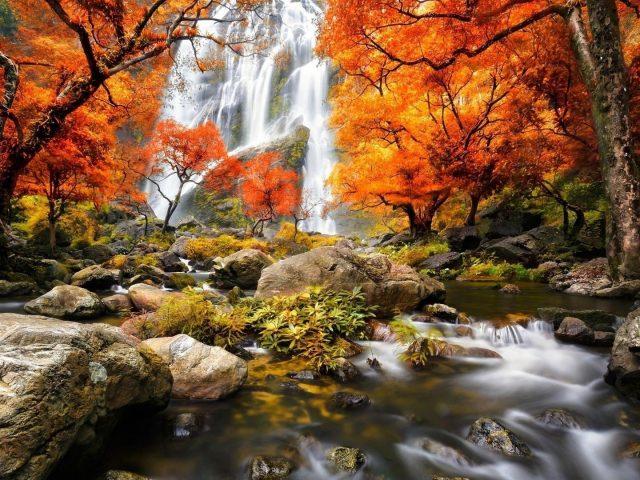 Водопады на горах и водный поток между скал окруженный красно желтыми осенними листьями деревьев лесная природа