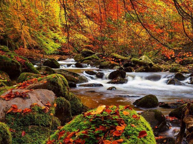 Ручей водопад между зелеными водорослями покрыл скалу в лесной природе
