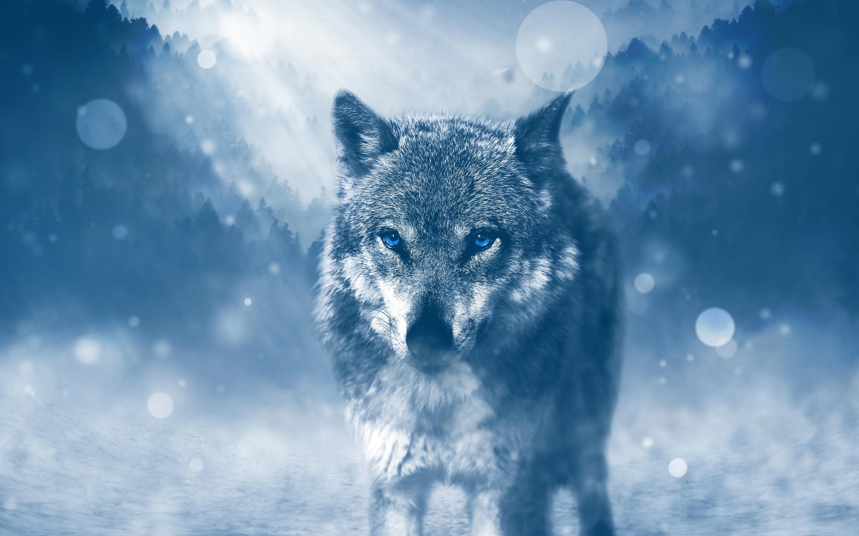 Зимний волк обои скачать