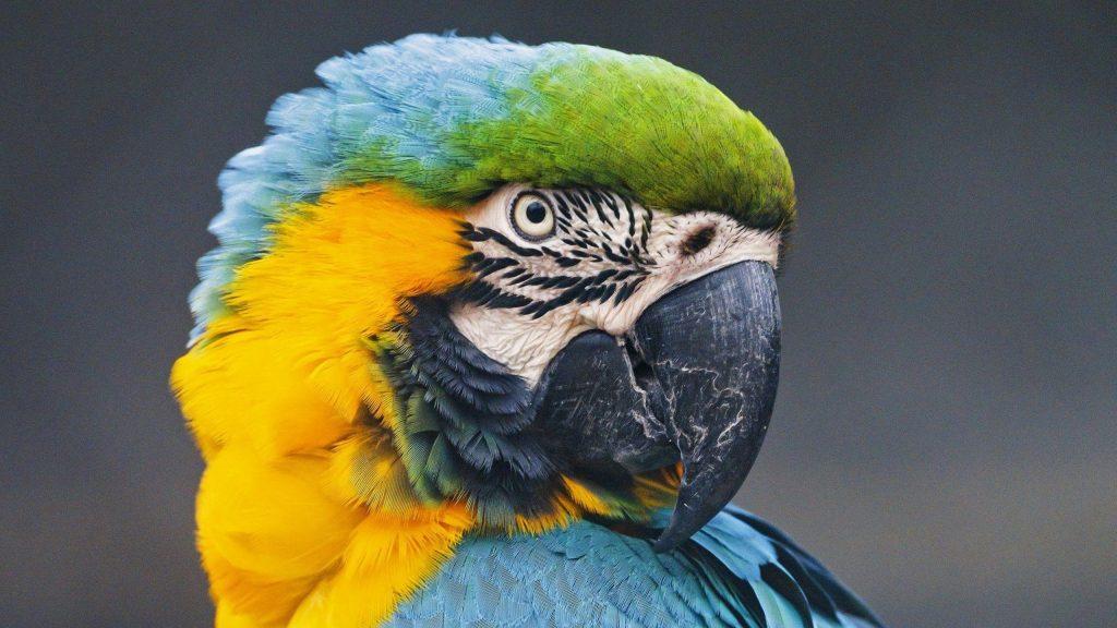 Красочная птица попугай ара в размытом фоне птицы обои скачать