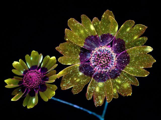 Mac os mojave цифровые цветы