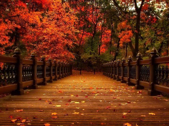 Деревянный мост между красно-желтыми осенними ветвями деревьев на фоне леса природа