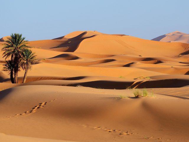 Пустынное дерево небо