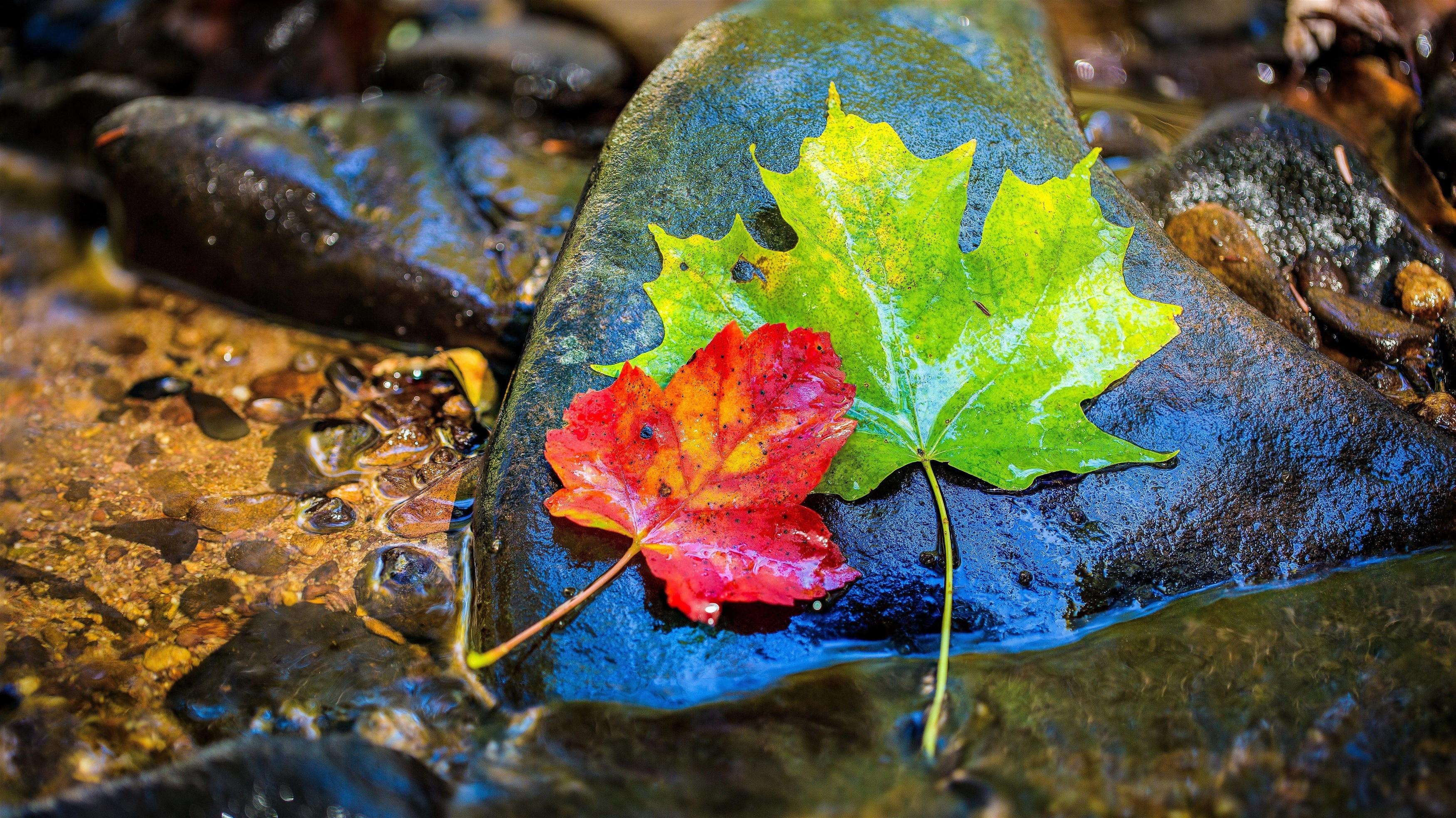 Разноцветные листья в камне обои скачать