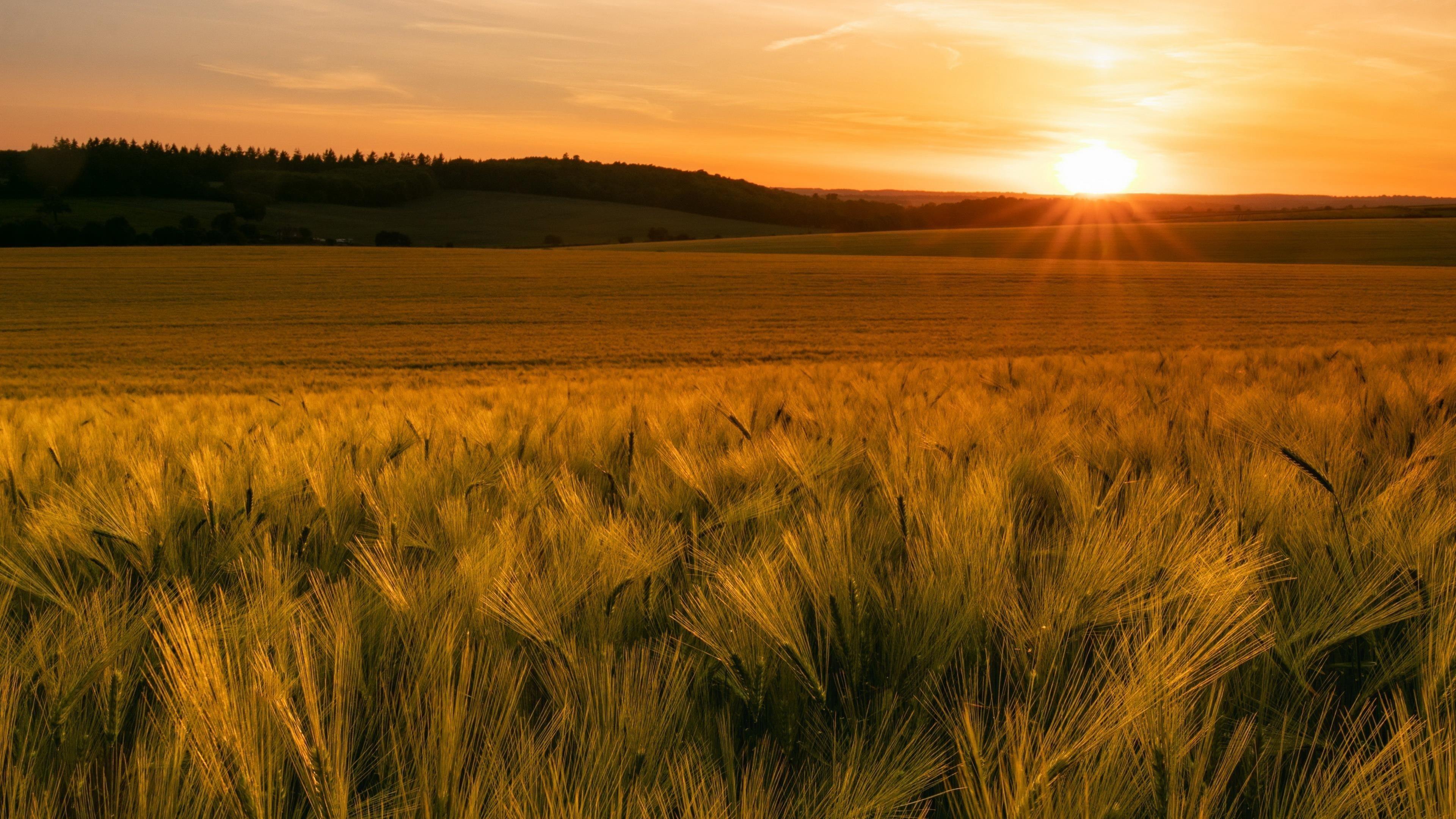 Солнце трава облака обои скачать