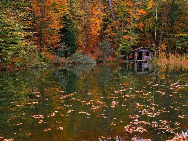 Хижина в реке с отражением зелено желтых осенних деревьев природа