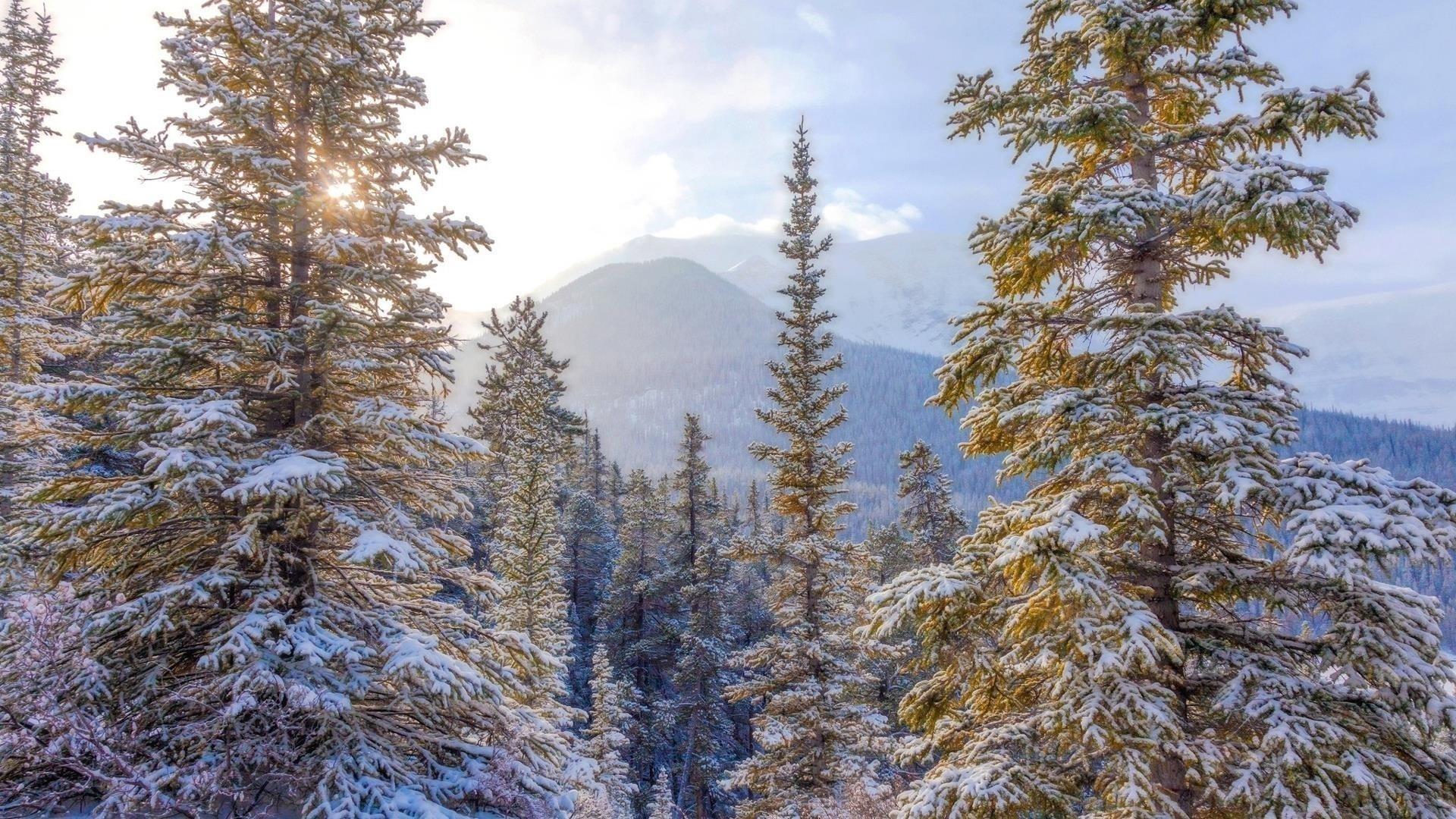 Заснеженная ель с пейзажем горной зимы обои скачать