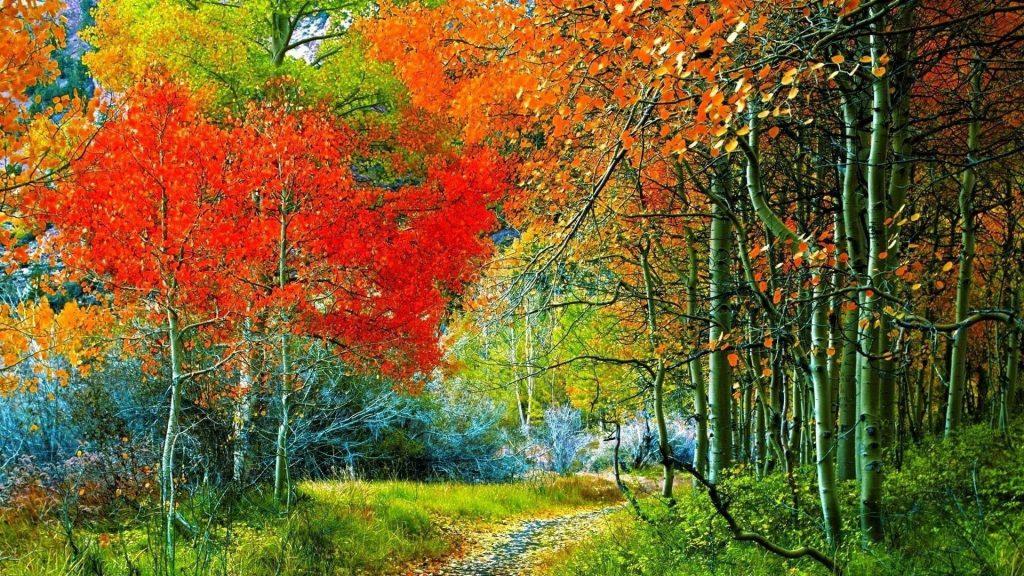 Тропинка через осенний лес природа обои скачать
