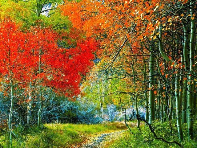 Тропинка через осенний лес природа