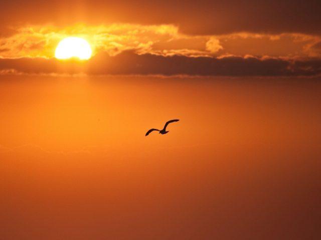Оранжевый солнечный диск птица лети свобода