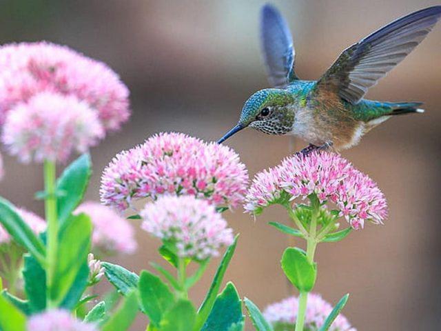 Красочная птица с длинным клювом сидит на бело-розовых цветах на размытом фоне птиц
