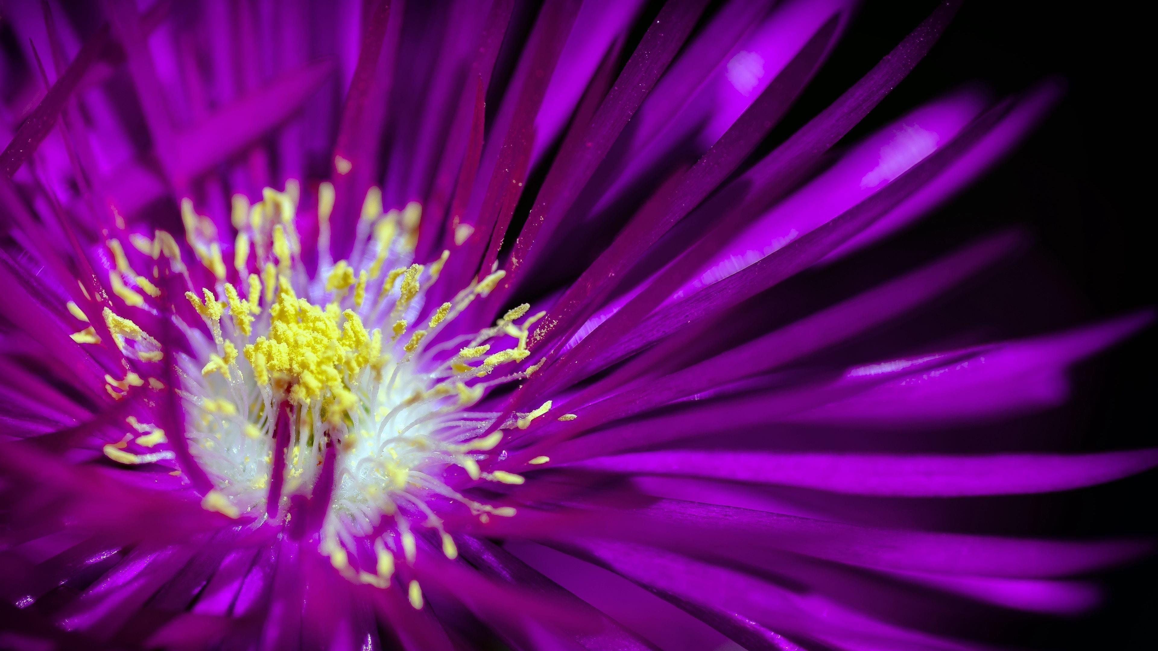 Фиолетовый цветок 1 обои скачать