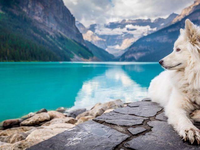 Белая собака сидит на скале в горах на фоне реки собака