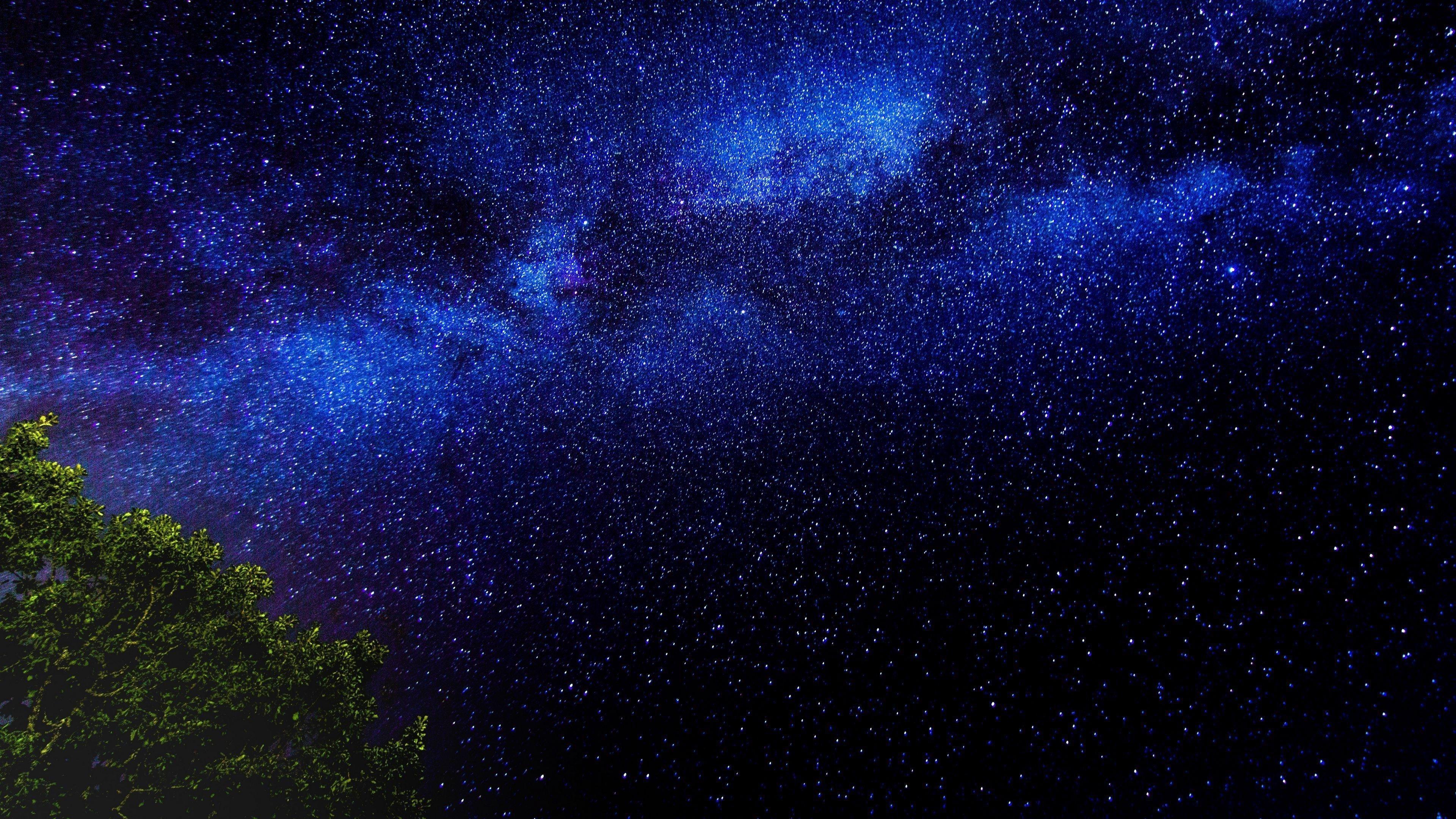 Ветви деревьев звездное небо звезды ночь обои скачать