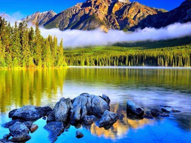 Пейзаж горы с туманом и деревьями покрытый лесом и рекой окруженный деревьями природа