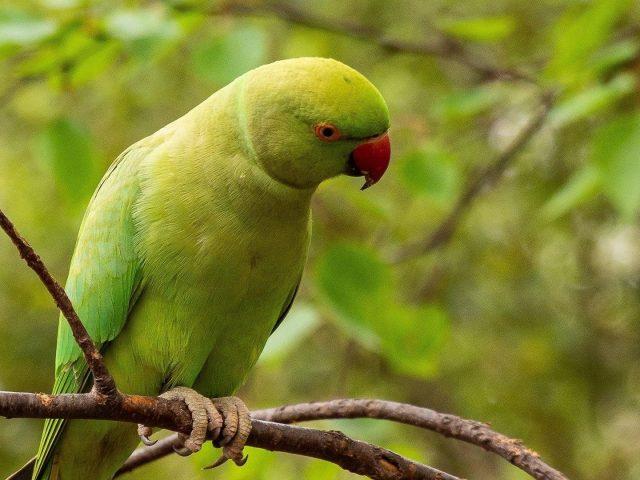 Зеленый попугай попугай сидит на ветке дерева в размытом зеленом фоне птицы