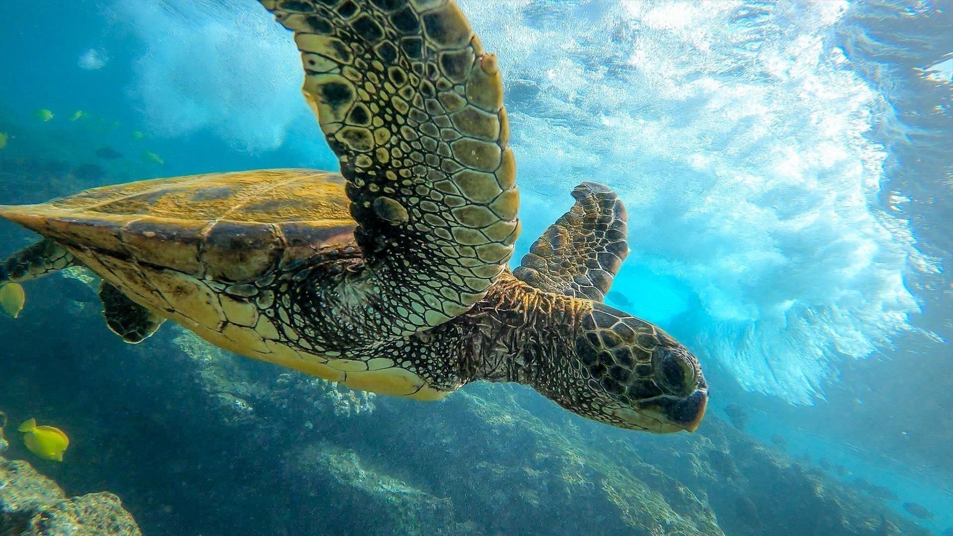 Животное черепаха обои скачать