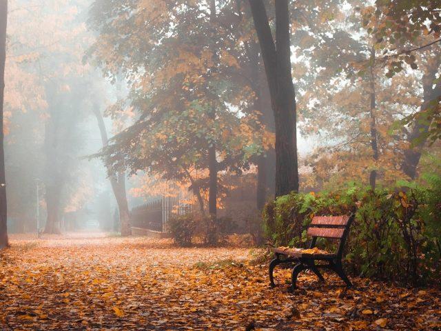 Деревянная скамейка в осенних деревьях парка природа
