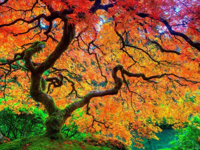 Красные зеленые оранжевые желтые лиственные деревья в лесу в дневное время природа
