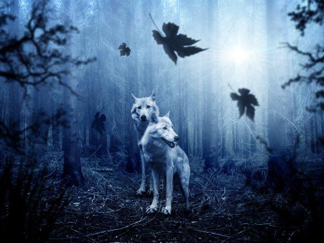 Лесные волки
