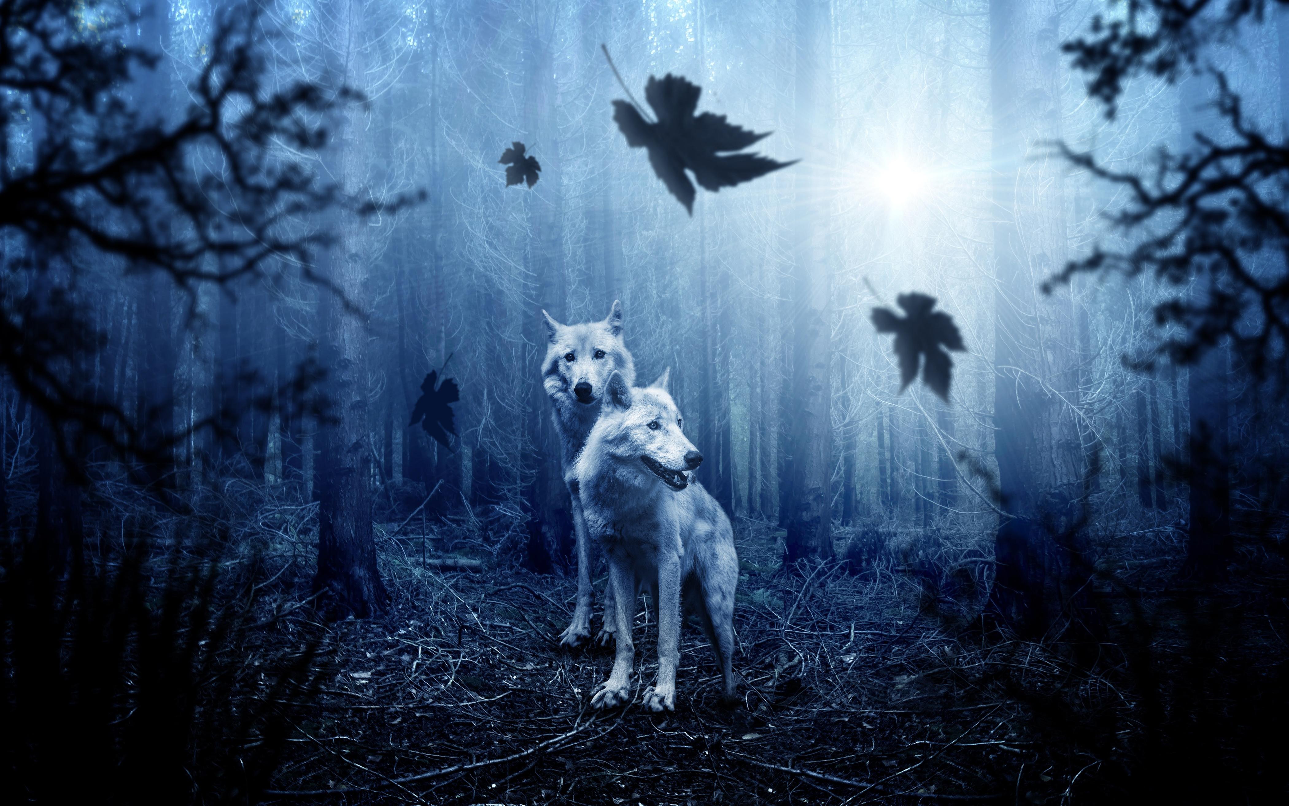 Воющий в ночи волк бесплатно
