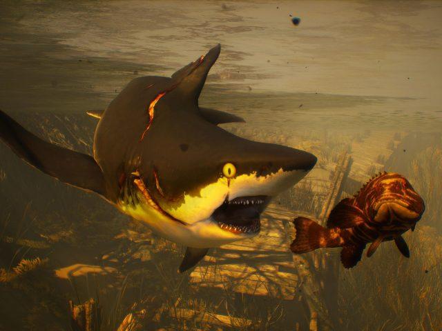 Людоед черно-белая акула