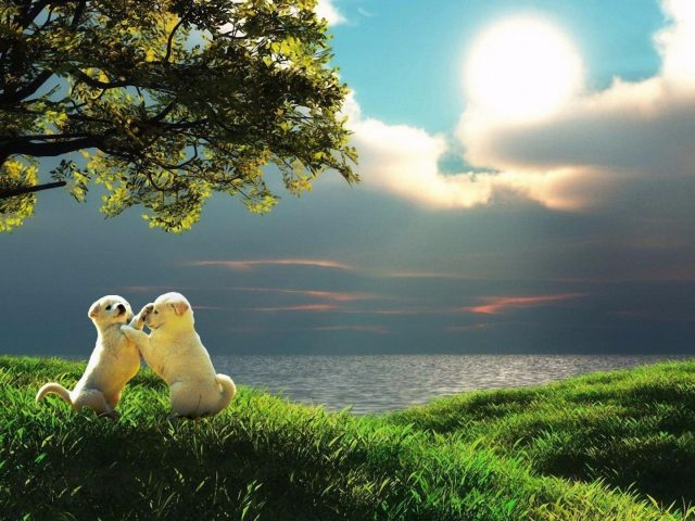 Природа дерево трава пляж облака