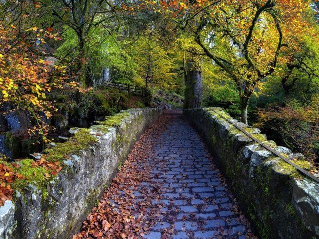 Каменная дорожка между красочными осенними деревьями природа