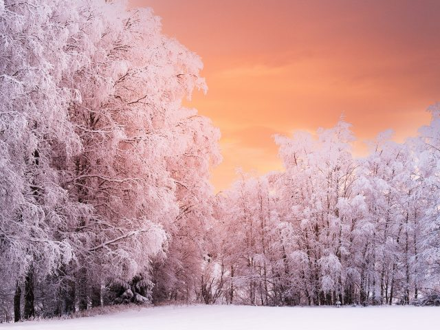 Wnter лесной закат.