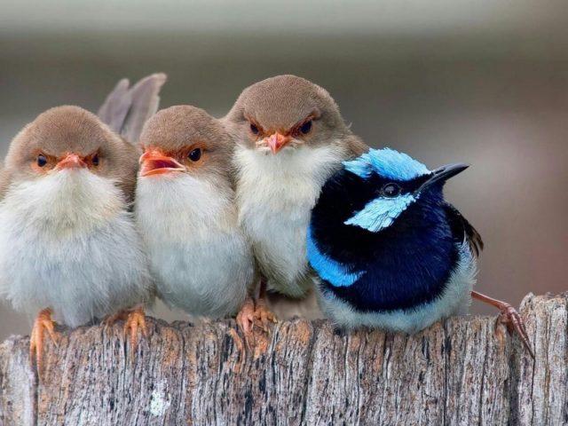 Маленькие птички вместе на деревянном заборе птицы