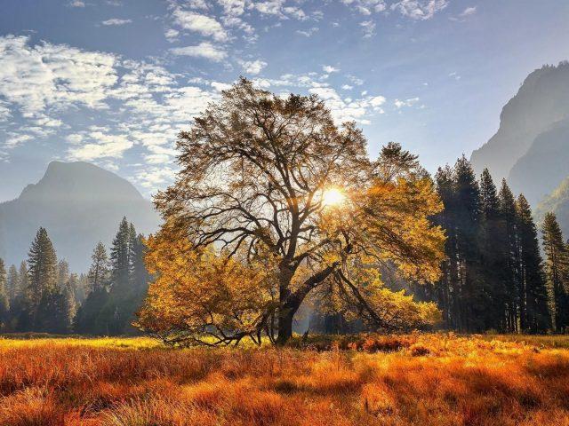 Йосемитский национальный парк Калифорния луг гора с деревьями природа