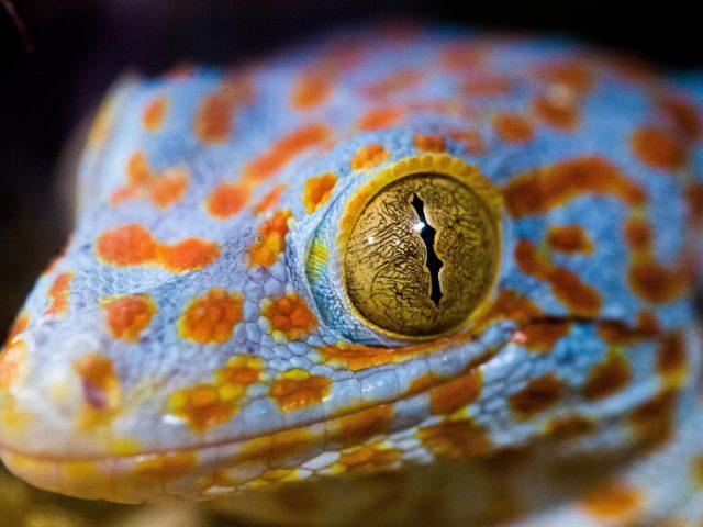 Макрос глаз ящерицы
