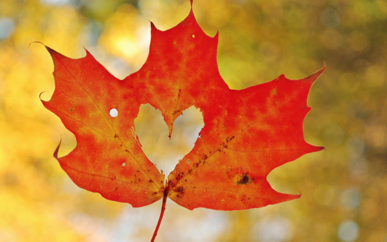 Любовь сердца кленовый лист. обои скачать