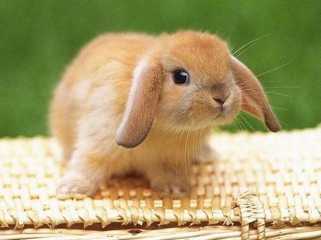 Милый Коричневый кролик сидит на вершине бамбуковой сумки на зеленом фоне животных