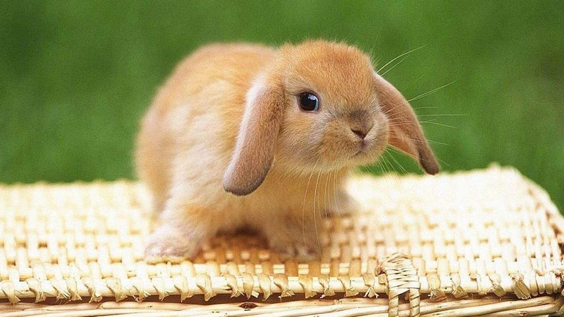 Милый Коричневый кролик сидит на вершине бамбуковой сумки на зеленом фоне животных обои скачать