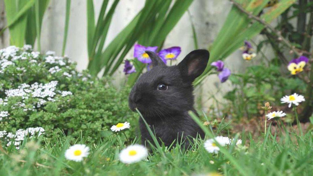 Черный кролик посреди зеленой травы цветы кролик обои скачать