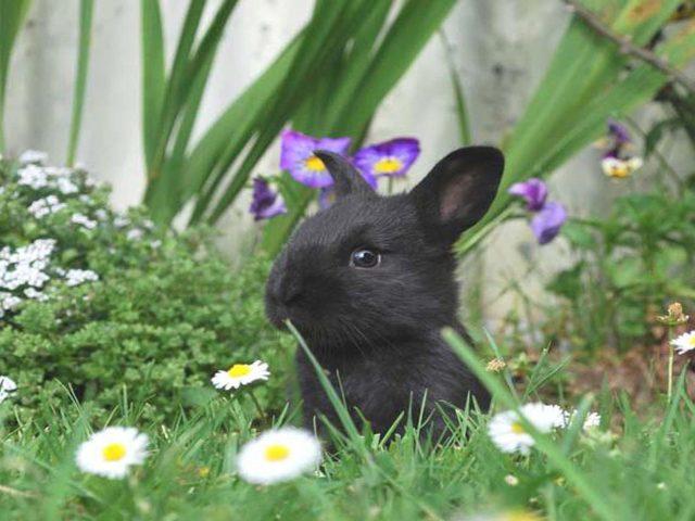 Черный кролик посреди зеленой травы цветы кролик