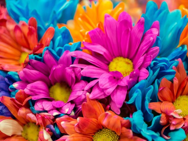 Красочные цветы