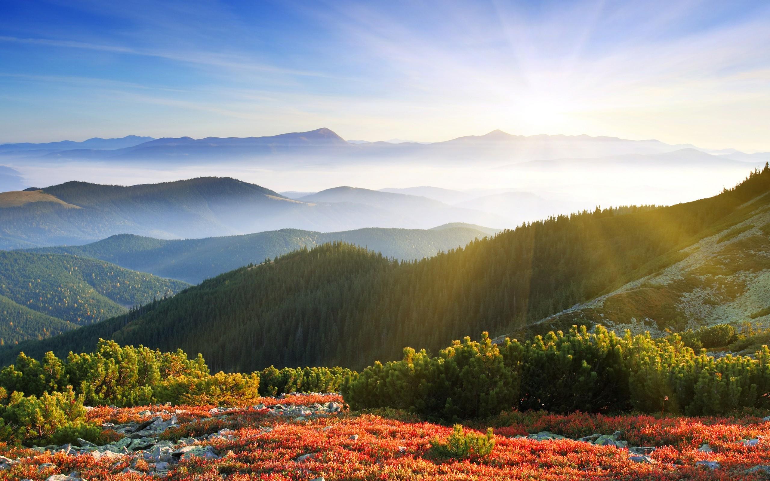 Лес, горы, Восход обои скачать