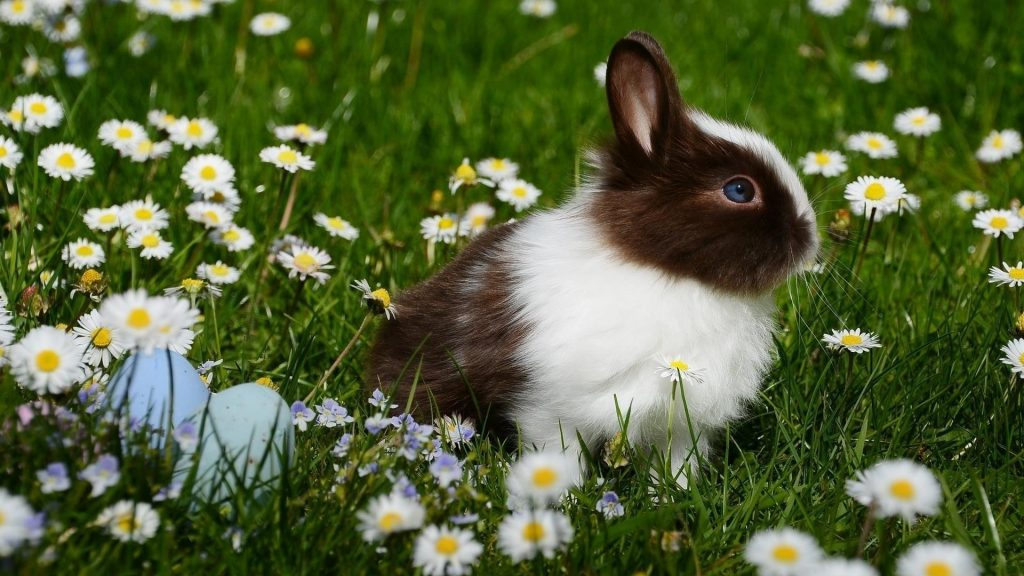 Белый черный кролик сидит на траве с цветами кролик обои скачать