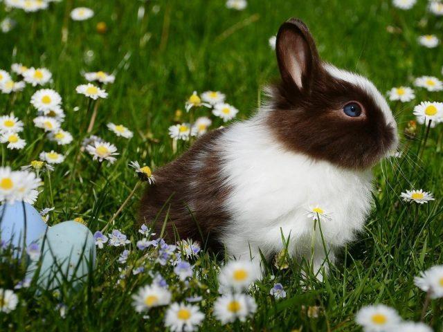 Белый черный кролик сидит на траве с цветами кролик
