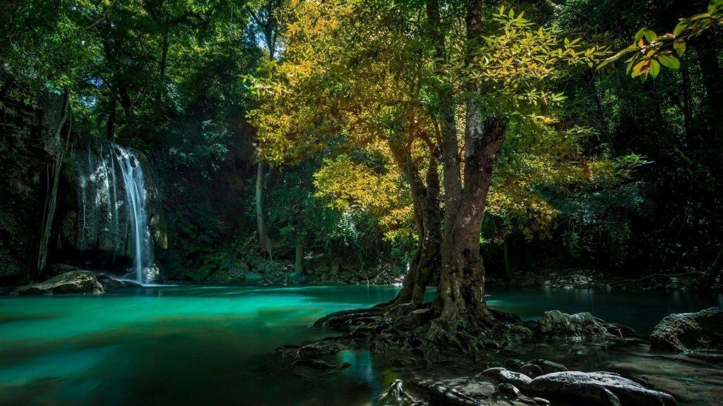 Красивый водопад в лесу, льющийся на реку, окруженную зелеными листьями деревьев природа обои скачать