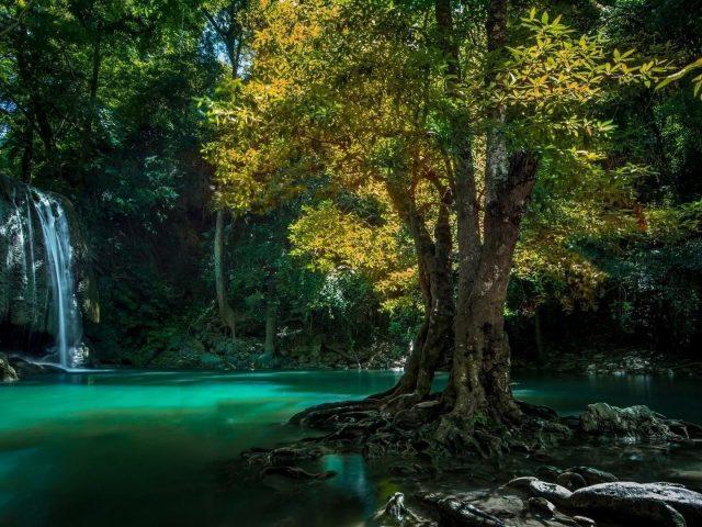 Красивый водопад в лесу, льющийся на реку, окруженную зелеными листьями деревьев природа