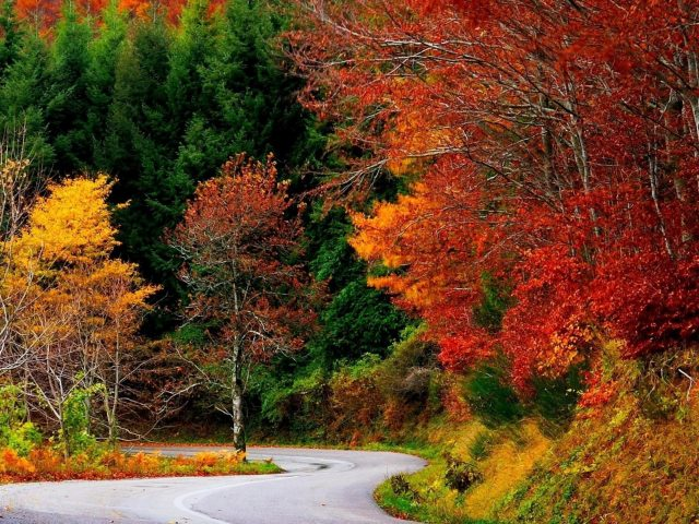 Дорога между разноцветными деревьями окружена лесом в дневное время природа