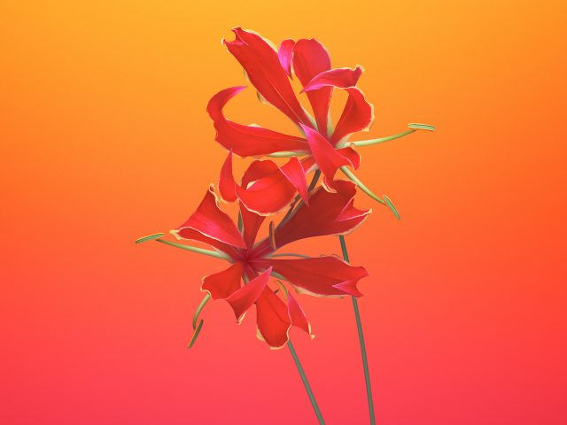 Gloriosa цветок IOS 11 iPhone 8 iPhone х акций