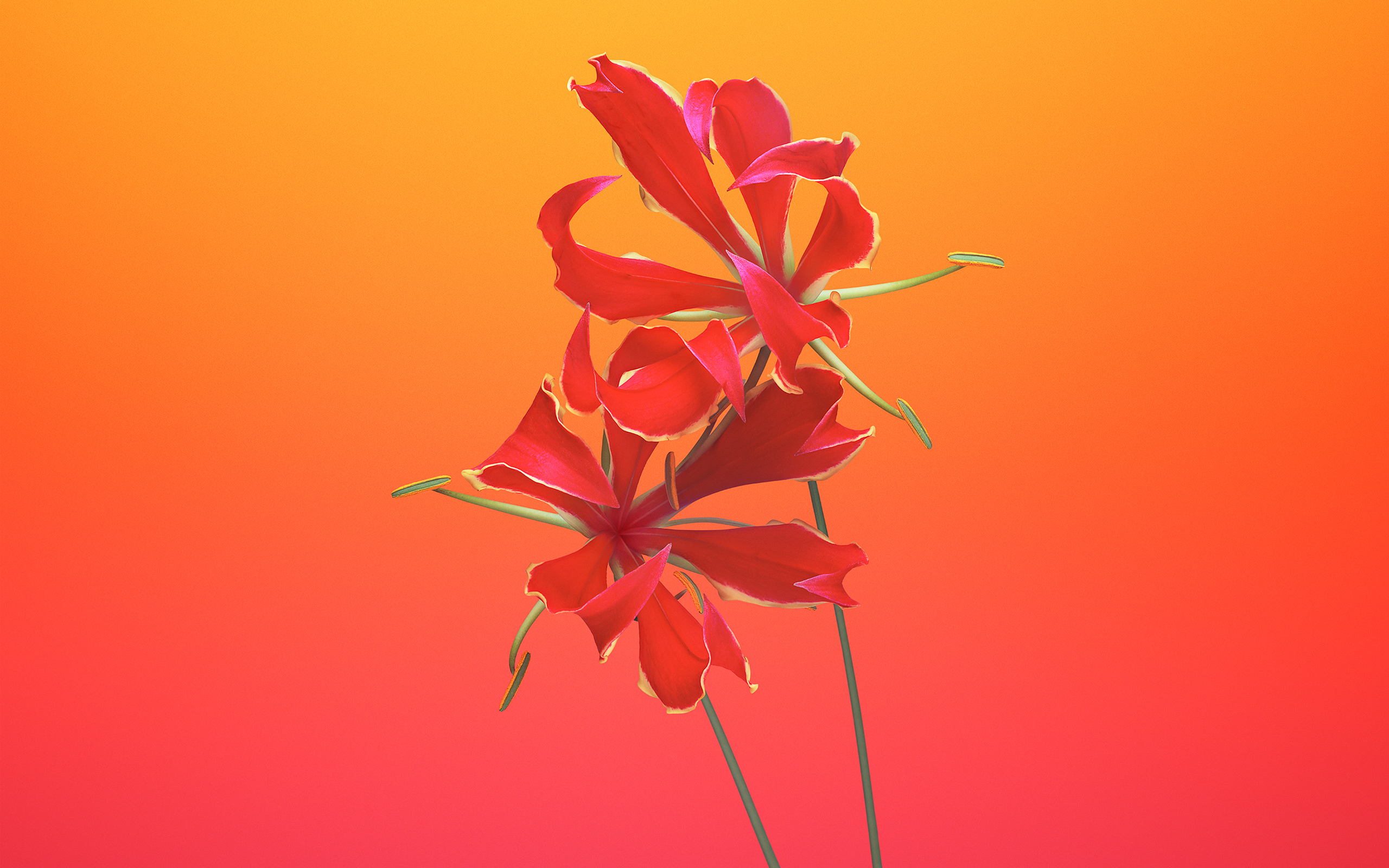 Gloriosa цветок IOS 11 iPhone 8 iPhone х акций обои скачать